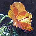 Backlit Hibiscus by Lea Novak
