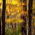 Backlit Leaves Abstract by Kenneth Sponsler