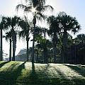 Backlit Palms by Kim Chernecky