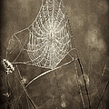 Backlit Spider Web In Sepia Tones by Dave Welling