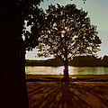Backlit Tree by Joseph Skompski