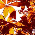 Backlit Tree Leaves 2 by Amy Vangsgard