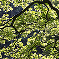 Backlit Tree by Steve Ball