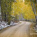 Backroads Of Autumn by Wildlife Fine Art