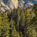 Backroads Of Yosemite by Michael J Samuels