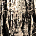 Backwater Cajun Country by Mike Nellums