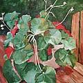 Backyard Begonia by Barbara Moak