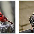 Backyard Bird Series by Heather Applegate