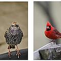 Backyard Bird Set by Heather Applegate
