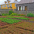 Backyard Garden In Louisbourg Living History Museum-1744-ns by Ruth Hager