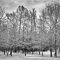 Backyard Georgia by Carolyn Marshall