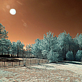 Backyard Morning Ir by Paulette B Wright