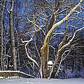 Backyard Trees by Rick Jackson