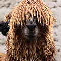 Bad Hair Day by James Brunker