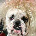 Bad Hair Day by Tap On Photo