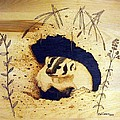Badger by Ed Cress