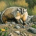 Badger   by Paul Krapf