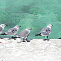 Bahama Birds by Aimee L Maher ALM GALLERY