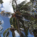 Bahamas Sky by Katherine Williams