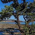 Bahia Honda Rail Bridge And Tree by Keith Stokes
