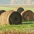Bails Of Hay by Steven Woodard