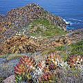 Baja California Coast by Hugh Smith