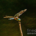 Balancing Dragonfly by Stephen Whalen