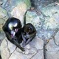 Balboa Park - San Diego Zoo by Harold E McCray