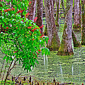 Bald Cypress And Red Buckeye Tree At Mile 122 Of Natchez Trace Parkway-mississippi by Ruth Hager