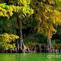 Bald Cypress Trees 1 - Digital Effect by Debbie Portwood
