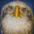 Bald Eagle 4 by Ingrid Smith-Johnsen