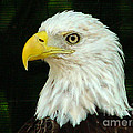 Bald Eagle-42 by Gary Gingrich Galleries