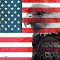Bald Eagle American Flag by Dan Sproul