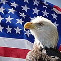 Bald Eagle And American Flag by Alan Hutchins