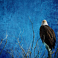 Bald Eagle Blues Into The Night by James BO Insogna