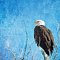 Bald Eagle Blues by James BO  Insogna