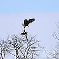Bald Eagle Courtship Ritual  1338 by Jack Schultz