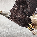 Bald Eagle Fly By by Wes and Dotty Weber
