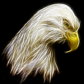 Bald Eagle Fractal by Adam Romanowicz