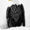 Bald Eagle II by Todd Bielby
