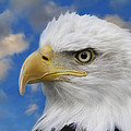 Bald Eagle In The Clouds by Steve McKinzie
