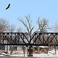 Bald Eagle Near Ludwig Mill by Jack Schultz