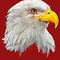 Bald Eagle Painting by Bob and Nadine Johnston