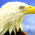 Bald Eagle Painting For Sale by Bob and Nadine Johnston