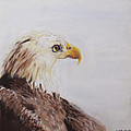 Bald Eagle by Sandy Brooks