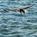 Bald Eagle by Saurav Pandey