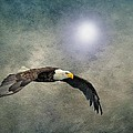 Bald Eagle Textured Art by David Dehner