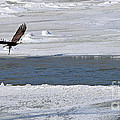 Bald Eagle With Fish 3655 by Jack Schultz