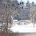 Bald Eagles In Tree In Grand Rapids Ohio 3996 by Jack Schultz