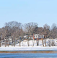 Bald Eagles In Tree In Grand Rapids Ohio Panorama by Jack Schultz